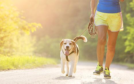 Pet Dehydration & Heatstroke