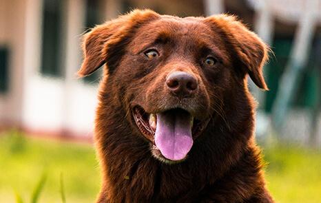 Senior-Pet-Care