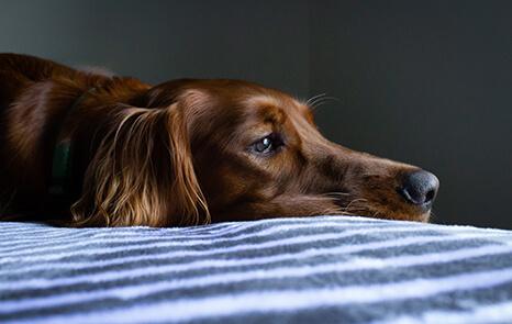 Sick Visits / Unwell Pets