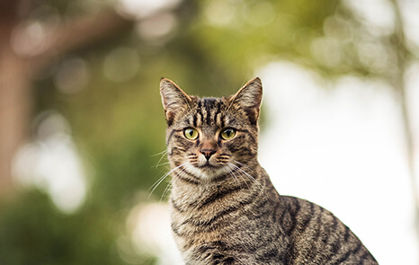 Wellness Care – Feline