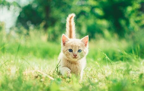 Wellness-Care-Kittens