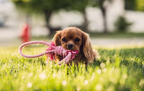 Wellness-Care-Puppy